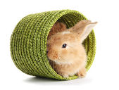 Fluffy foxy rabbit in wicker basket isolated on white — Stock Photo