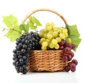 Whit üzerinde izole olgun tatlı üzüm sepeti, ürün çeşitliliği — Stok fotoğraf