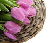 красивый букет фиолетовые тюльпаны, изолированные на белом — Стоковое фото