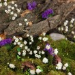 Flowers, tree bark and moss in forest close up - Stock Photo