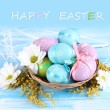 Easter eggs in basket and mimosa flowers, on blue wooden background - Stock Photo