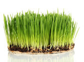 Green grass with fertile soil isolated on white — Stock Photo