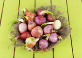 Sprouting onions in basket on wooden table — Stock Photo