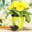 Beautiful yellow primulin flowerpot on wooden table on green background — Stock Photo #24280717