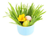 Easter egg in bowl with grass on table isolated on white — Foto de Stock