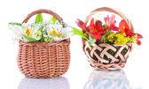 Two baskets freesia isolated on white — Stock Photo