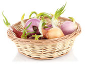 Sprouting onions in basket isolated on white — Stock Photo