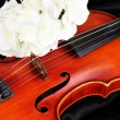 Classical violin on fabric background — Stok fotoğraf