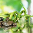 Still life with green bamboo plant and stones, on bright background - Foto Stock