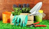 Garden tools on grass in yard — Stock Photo