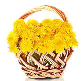 Dandelion flowers in wicker basket isolated on white — Stock Photo