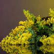 Stock Photo: Sprigs of mimoson bright background
