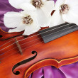 Classical violin on fabric background — Stock Photo #24509341