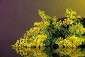 Sprigs of mimosa on bright background — Stock Photo