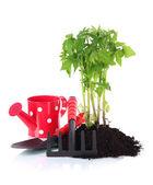 Giovane pianta in terreno isolato su bianco — Foto Stock
