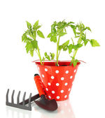 Planta joven en cubo aislado en blanco — Foto de Stock
