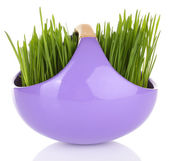 Green grass in decorative pot isolated on white — Stock Photo