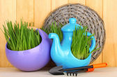 Green grass in decorative pot on wooden background — Stock Photo