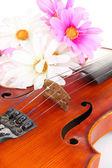 Klasické housle s květinami zblízka — Stock fotografie