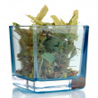 Dried herb in glass container isolated on white - Stock Photo