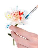 Vrouwelijke handen met witte bloem en het schilderen met kleuren, geïsoleerd op wit — Stockfoto
