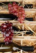 Coffret en bois avec des bouteilles de vin se bouchent — Photo