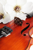 Classical violin with flowers close up — Stock Photo