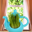 Royalty-Free Stock Photo: Green grass in decorative pot on window background
