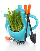 Grünes gras in dekorativen topf isoliert auf weiss — Stockfoto