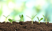 Green seedling growing from soi — Stock Photo