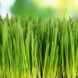 Green grass with fertile soil closeup — Stock Photo