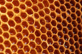 Yellow beautiful honeycomb with honey, background — Stockfoto