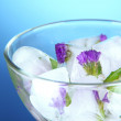 Ice cubes with flowers and herbs in bowl, on blue background — Stock Photo