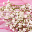 Stock Photo: Flowers on pink background