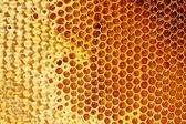 Yellow beautiful honeycomb with honey, background — Stockfoto