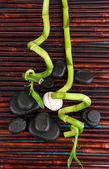 Vackra bambu grenar med stenar för spa på träbord — Stockfoto
