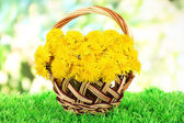 Dandelion flowers in wicker basket on grass on bright background — Stock Photo