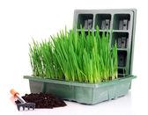 Caja de semilla con plántulas aisladas en blanco — Foto de Stock
