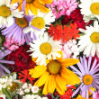 Beautiful bouquet of bright wildflowers, close up — Stock Photo #25092805