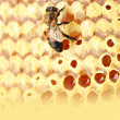 Foto Stock: Yellow beautiful honeycomb with honey and bee close-up background