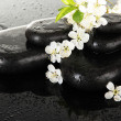 Spa stones and white flowers on dark background — Stock Photo