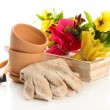 Beautiful spring flowers in wooden crate and gardening tools isolated on white — Stock Photo
