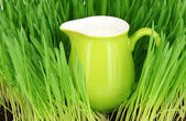 Pitcher of milk standing on grass close up — Stock fotografie