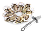 Oysters isolated on white — Stockfoto