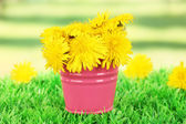 Dandelion flowers in bucket on grass on bright background — Stock Photo