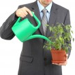 Young businessman watering pot isolated on white — Stock Photo