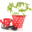 Young plant in bucket isolated on white — Stock Photo #25326609