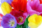 Belle tulipani in primo piano bouquet — Foto Stock
