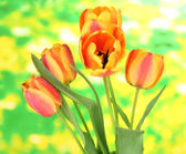 Beautiful orange tulips on bright background — Stock Photo