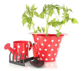 Young plant in bucket isolated on white — Stock Photo